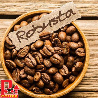 Cà phê hạt Robusta (S14)